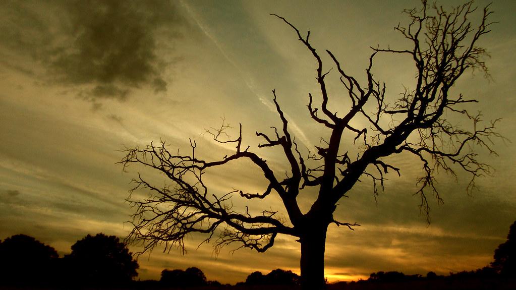 spooky tree hampstead heath london richard cartawick flickr
