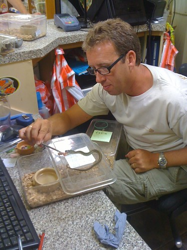 Antony helping out with the hatchling snake feed in his nice new glasses | by Northampton Reptile Centre