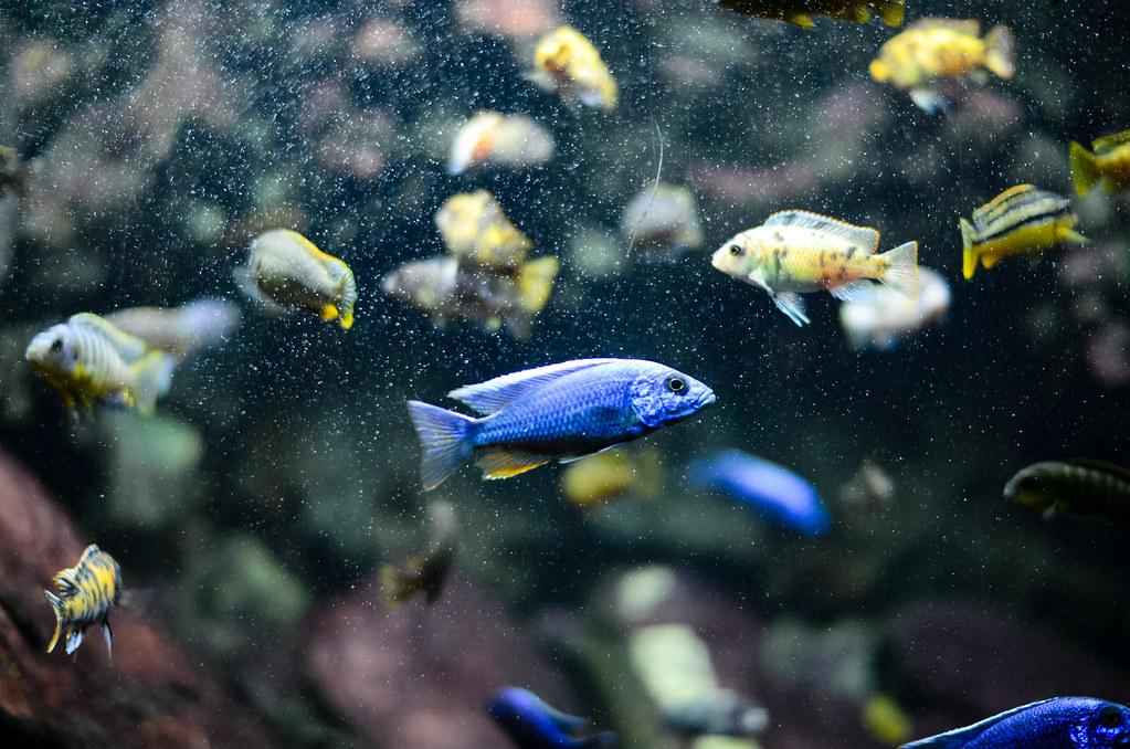 A l'aquarium tropical de la Porte Dorée