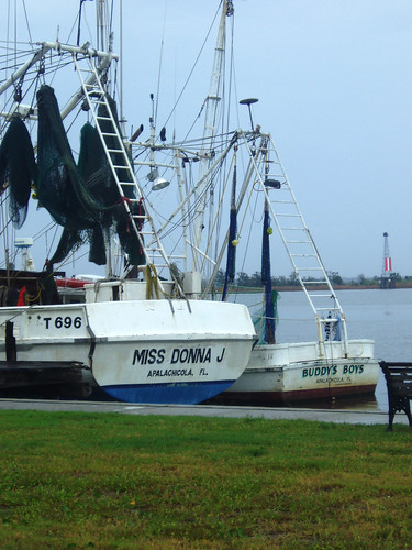 Commercial fishing fleet in apalachicola fl commercial for Commercial fishing florida