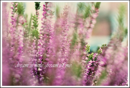 Dream A Little Dream Of Me | by Sweet Bee Magdalena Nowak Fotografia