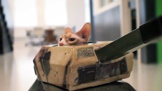 Cats in Tanks on Vimeo by Whitehouse Post | by fabiofrey