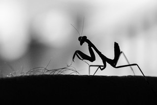 Praying Mantis - Lawn mower | by TeryKats