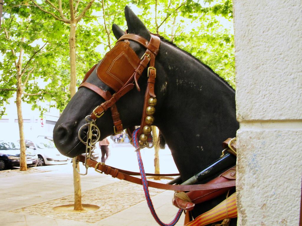 Caballo de mentira cabezada visto por las calles de for Cabezadas para caballos