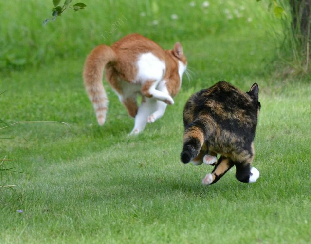 Can You Use Advantage  For Dogs On Cats