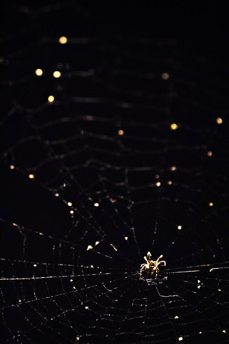 Spider Lights | by kirberich