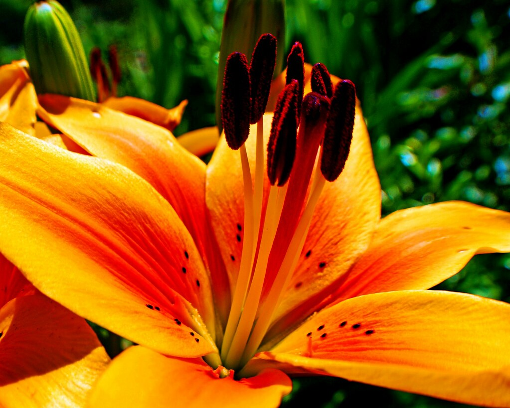big orange flower teresa delcambre flickr