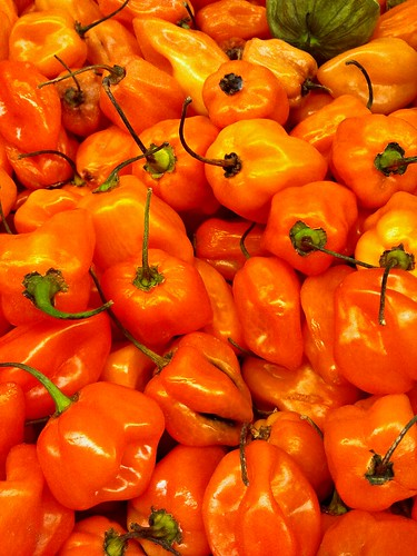 Habanero Peppers - Burn Baby Burn! | by KurtClark