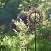 Sycamore Seed Sun