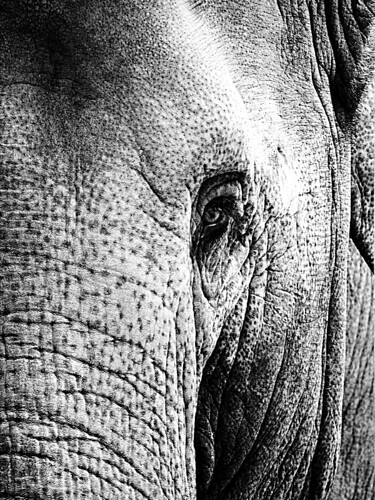 Portrait of an elephant | by Azza K