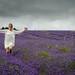 UKWP Lavender Shoot (147 of 217)