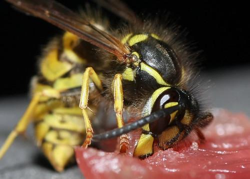 Wasp 2011