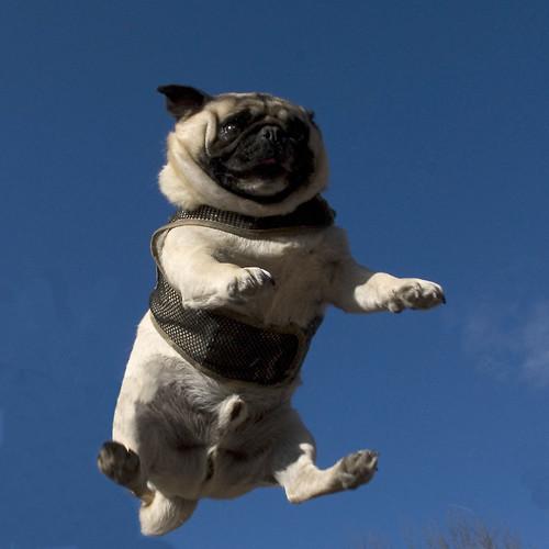Free Dog Trampoline