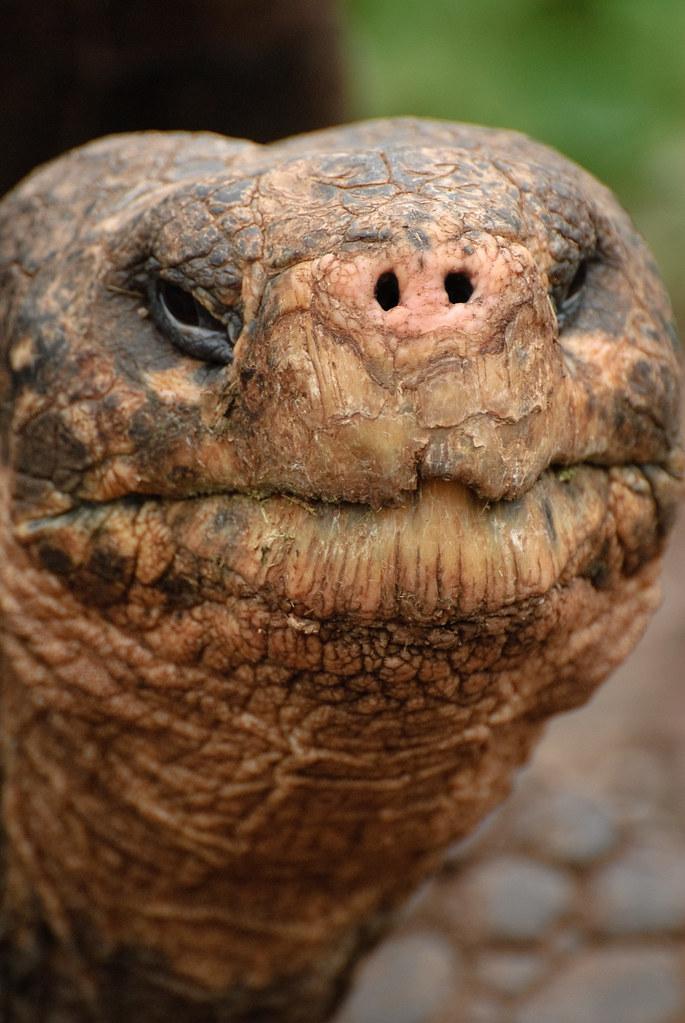 About >> tortoise face | oliver.dodd | Flickr