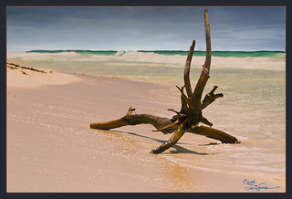 Tulum Driftwood | by Lach Franquemont