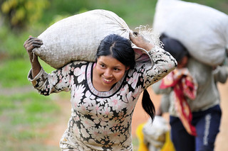 NP coffee sacks | by CIAT International Center for Tropical Agriculture