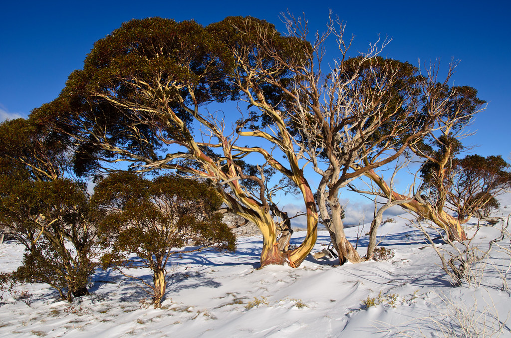 how to get perisher from sydney