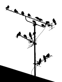 Crows on the telly | by Jens Rost
