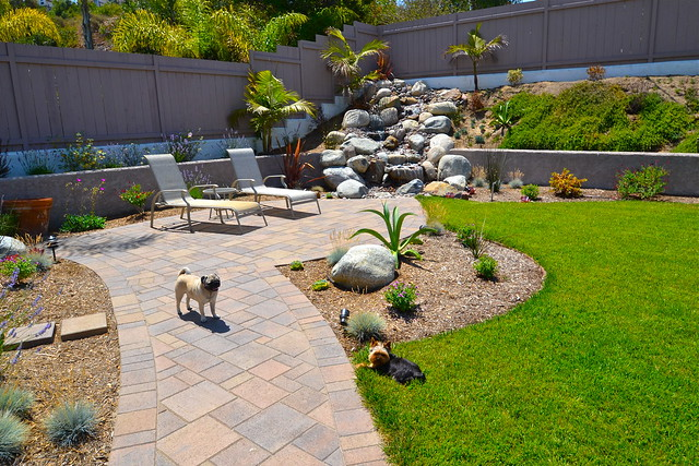 Pet friendly landscape design flickr photo sharing for Dog friendly landscape design