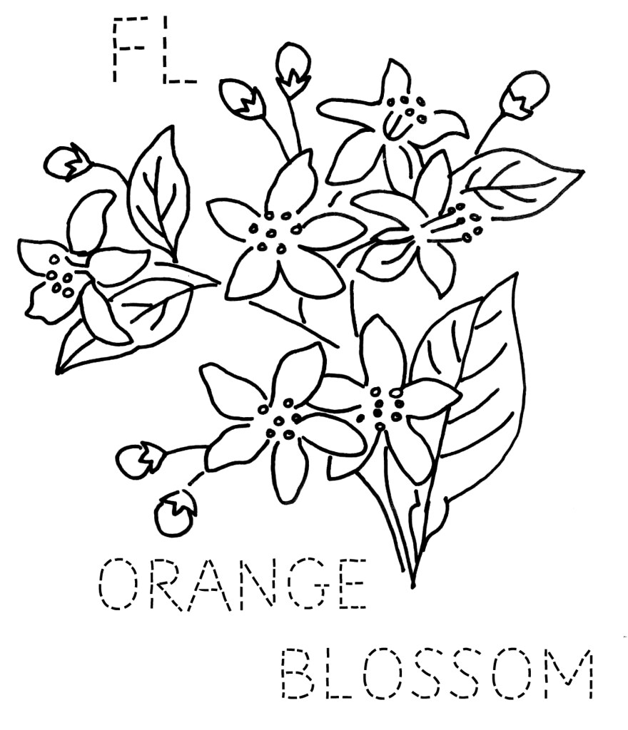 florida orange blossom to download the 6 inch block size flickr