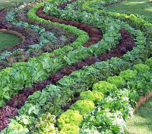 vegetable design selina veggiegardenblogspotcom The