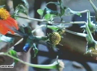 HUMMINGBIRD on Vimeo by cweick | by CARLOSWEICK