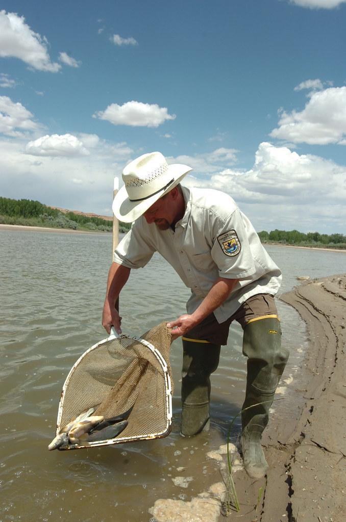 Stocking razorback suckers in the yampa river u s fish for Yampa river fishing report