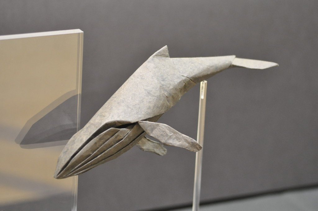 Humpback Whale By Dan Robinson