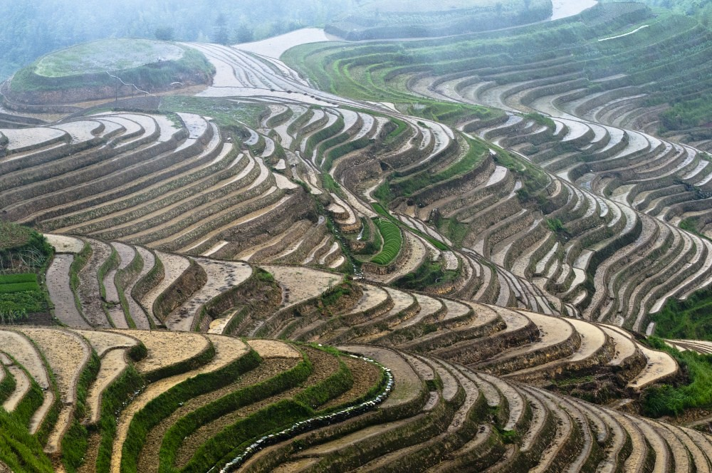 Longji dragon 39 s backbone terraced rice fields the for 100 rice terrace drive columbia sc