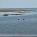 Lake Eyre flood 2