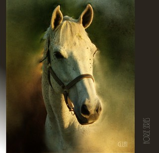Horses Series_________#.1: head portrait(Female) | by G.LAI(on and off ,)