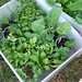 Eat & Live Green! Make Fall Planting Simple