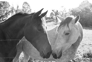 Horses' Heart | by Terry Aldhizer