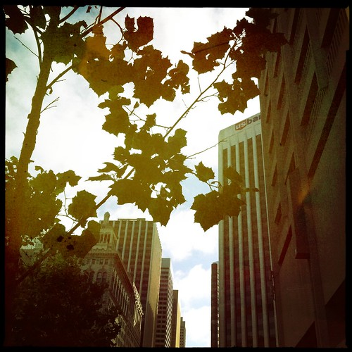 SF cityscape & leaves | by treiCdesigns