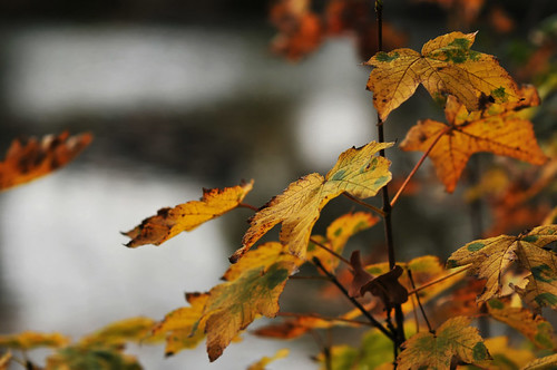 bokeh de feuille, 1 | by Patrick.Raymond (3M views)
