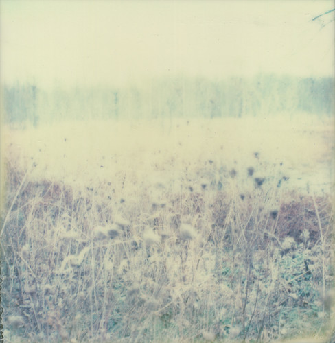 fading | november 20. 2011 | by A Midwest Girl
