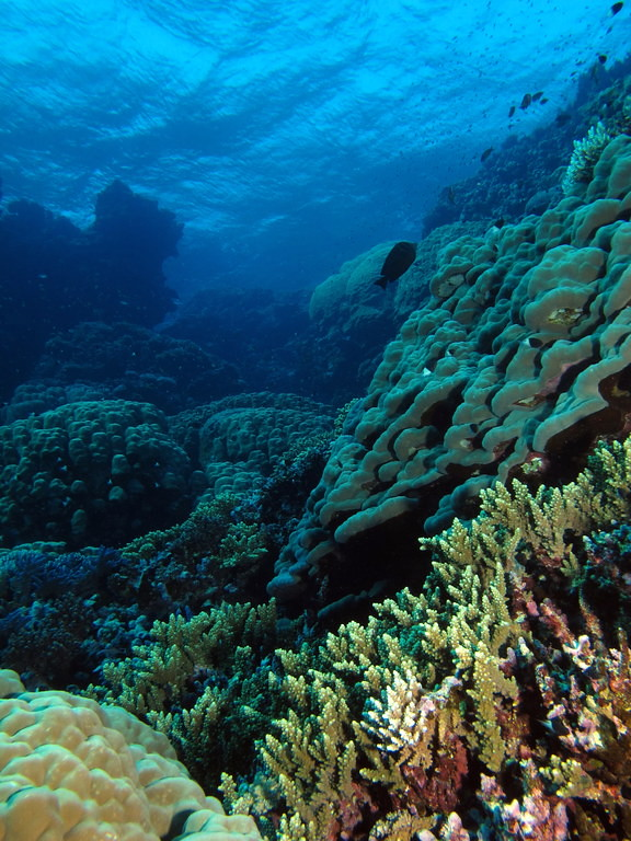 What Is Coral Bleaching? How Warming Ocean