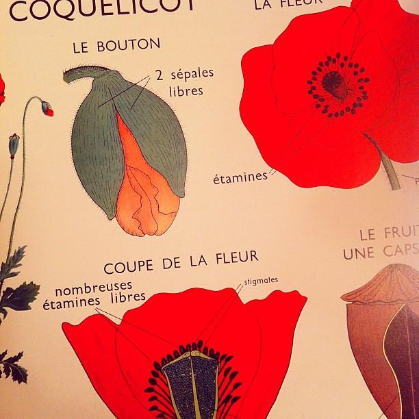 poppy diagram. coolest book ever. | Valerie Jar | Flickr