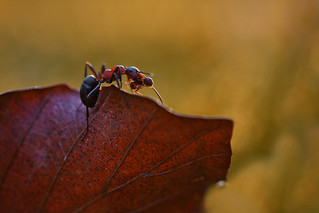 a small ant on a big journey | by Crazy Ivory