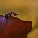 a small ant on a big journey