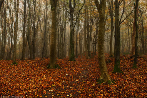 Barrhill Woods - part 1 | by .Brian Kerr Photography.