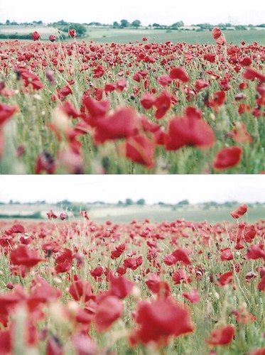Poppy Haze | by ringsonherfingers//
