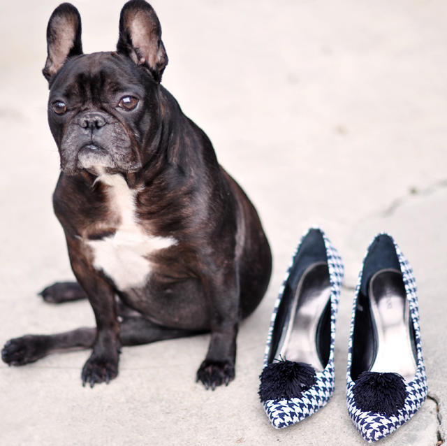 French Bulldog Shoes Uk