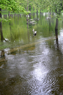 High water levels | by michiganseagrant