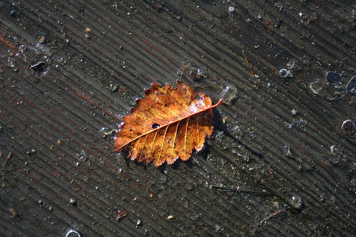 Leaf Melt | by glaciergirl