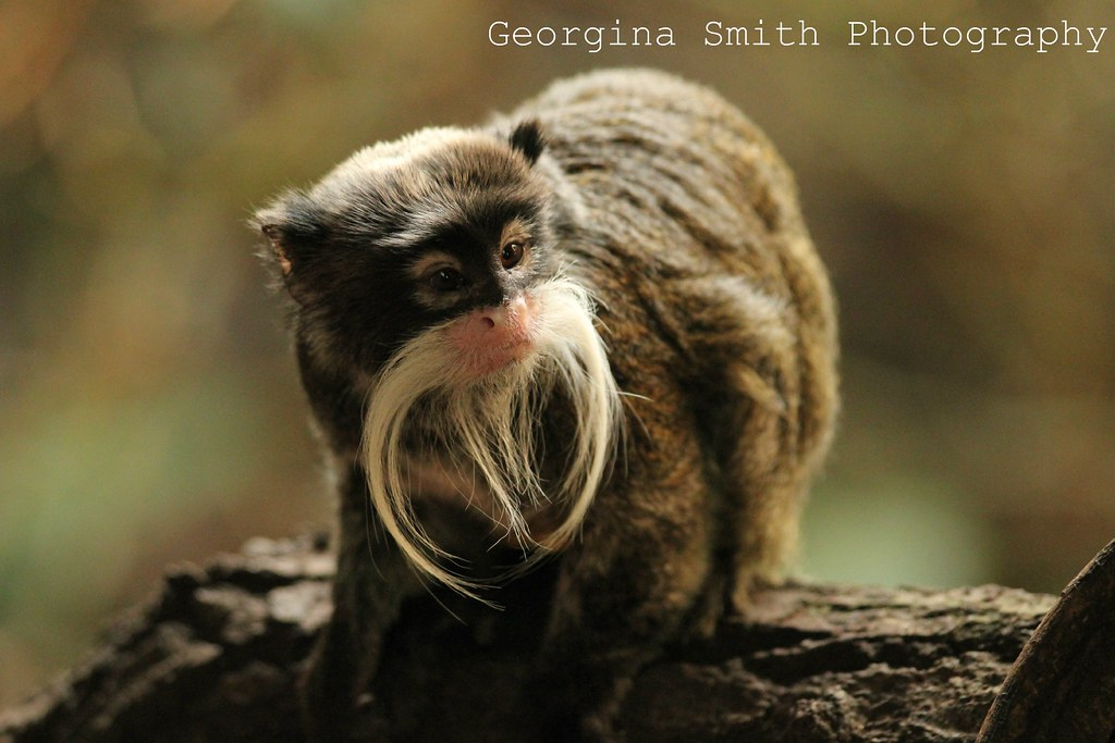 Beardy Monkey: So Glad My Lense Didn't Steam Up In