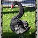 Black bird -Alvaroking81-