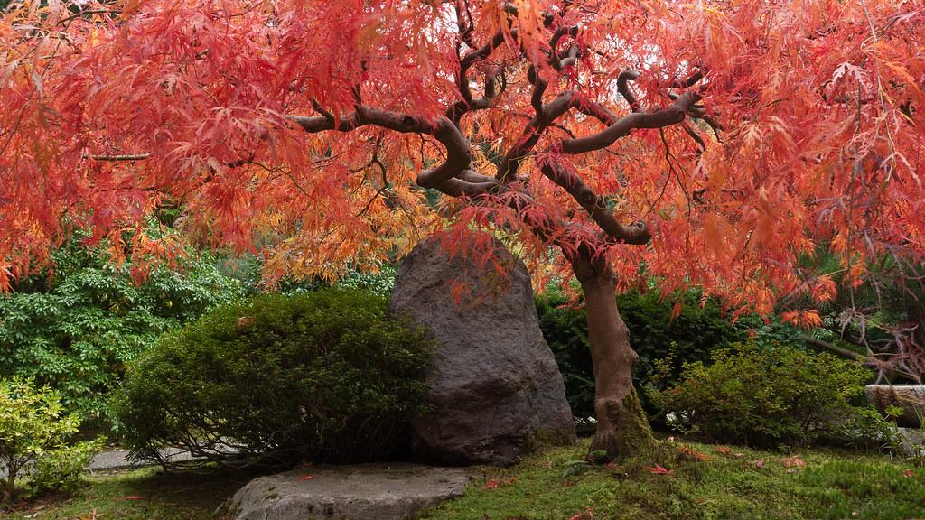 Fall colors portland japanese garden 2 fall colors at for Japanese garden colors