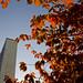 Autumn at UN Headquarters