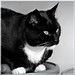 Cortez in black and white.